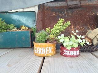 植物�C.jpg